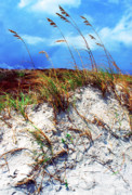 Sea Oats Prints - Sand Dune and Sea Oats Print by Thomas R Fletcher