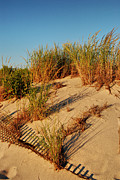 Plants Framed Prints Photos - Sand Dune II - Jersey Shore by Angie McKenzie
