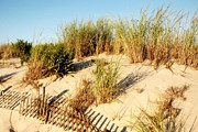 Seaside Park - New Jersey - Sand Dune III - Jersey Shore by Angie McKenzie
