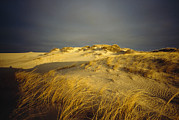 Nauset Beach Framed Prints - Sand Dunes And Beach Grass In Golden Framed Print by James P. Blair