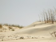 Sand Dunes Metal Prints - Sand Dunes and Sea Oats Metal Print by Al Powell Photography USA