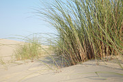 Aquitaine Metal Prints - Sand Dunes, Biscarrosse, Landes, Aquitaine, France Metal Print by Photo Division