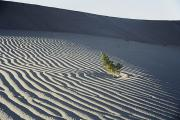 Sand Patterns Metal Prints - Sand Dunes, Death Valley, California Metal Print by Marc Moritsch
