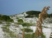 Panama City Beach Posters - Sand Dunes of PCB Poster by Anthony Allen