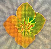 Sand Flower Print by Mitch Shindelbower