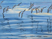 Formation Pastels Prints - Sand Pipers Print by James Geddes