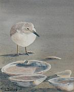 Sandpiper Painting Framed Prints - Sand Puddles Framed Print by Haldy Gifford