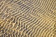 Sand Pattern Posters - Sand ripples in shallow water Poster by Elena Elisseeva