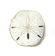 Dollar Paintings - Sanddollar I by Amanda Makepeace