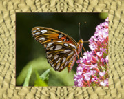 Flower Photos Framed Prints - Sandflow Butterfly Framed Print by Bell And Todd