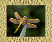 Colorful Photos Framed Prints - Sandflow Dragonfly Framed Print by Bell And Todd