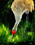 Cranes Mixed Media Prints - Sandhill Crane Print by Carol Allen Anfinsen