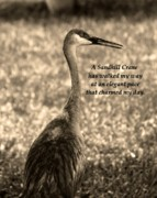Sandhill Framed Prints - Sandhill Crane Poem Framed Print by Vilma Rohena