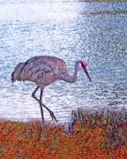 Cranes Originals - Sandhill Crane Stroll Painted by Adele Moscaritolo