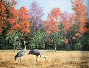Red Leaves Painting Posters - Sandhill Cranes In Florida Poster by Marilyn Dunlap