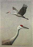 James W Johnson Drawings Framed Prints - Sandhill Cranes Framed Print by James W Johnson