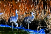 Cranes Originals - Sandhill Cranes Pair Fractal by Lawrence Christopher