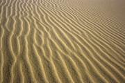 Sahara Sunlight Prints - Sandhills Print by MotHaiBaPhoto Prints