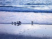 Anna Villarreal Garbis Metal Prints - Sandpiper Beach I Metal Print by Anna Villarreal Garbis