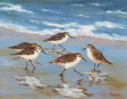 Naples Paintings - Sandpipers by Barrett Edwards