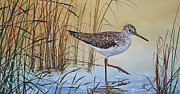 Watercolor Print Framed Prints - Sandpipers Bright Shore Framed Print by James Williamson