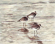 Sandpiper Painting Framed Prints - Sandpipers Framed Print by John Brown