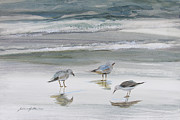 Landscape Framed Prints Painting Posters - Sandpipers Poster by Julianne Felton