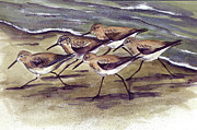 Edge Paintings - Sandpipers by Nancy Patterson