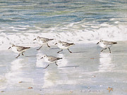 Surf Metal Prints - Sandpipers on Siesta Key Metal Print by Shawn McLoughlin