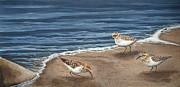 Quebec Paintings - Sandpipers by Ron Plaizier