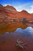 Coyote Photos - Sandstone Pools by Mike  Dawson