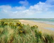 Seacoast Photo Posters - Sandunes At Fethard, Co Wexford, Ireland Poster by The Irish Image Collection