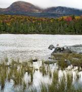Baxter Park Posters - Sandy Stream Pond view of Baxter Peak in Baxter State Park Maine Poster by Brendan Reals