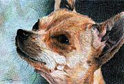 Chihuahua Originals - Sandy by Tina Storey