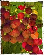 Sangiovese Framed Prints - Sangiovese Grapes Framed Print by Patricia Stalter