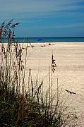 Sanibel Island Prints - Sanibel Island Beach FL Print by Susanne Van Hulst