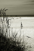 Oat Prints - Sanibel Island Florida Print by Susanne Van Hulst