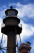 Photos Of Birds Prints - Sanibel Island Lighthouse Print by Skip Willits