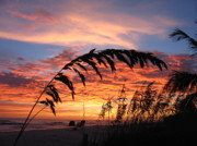 Yellow Prints Prints - Sanibel Island Sunset Print by Nick Flavin