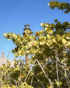 White Grapes Framed Prints - Sanibel Lighthouse Framed Print by Chris Andruskiewicz