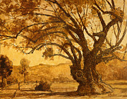 Sepia Ink Drawings - SanMarin California Tree by Bill Mather
