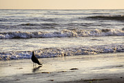 Pondering Photo Prints - Santa Barbara 7 Print by Jessica Velasco