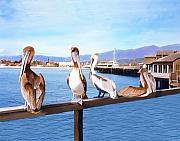 Beach Digital Art - Santa Barbara Pelicans by Kurt Van Wagner