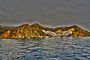 Carts Framed Prints - Santa Catalina Island Framed Print by Cheryl Young