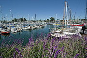 Docked Sailboats Posters - Santa Cruz Harbor - California Poster by Brendan Reals