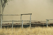 Agricultural Structures Posters - Santa Gertrudis Cattle Create A Dust Poster by Jason Edwards