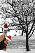 Christmas Dogs Prints - Santa Hat Dogs Print by Lila Fisher-Wenzel