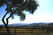Vineyards Photos - Santa Inez Valley View by Susanne Van Hulst
