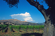 California Prints Prints - Santa Ynez Vineyard View Print by Kathy Yates