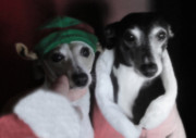 Italian Greyhound Mixed Media - Santas Babies by Ray LeCara Jr